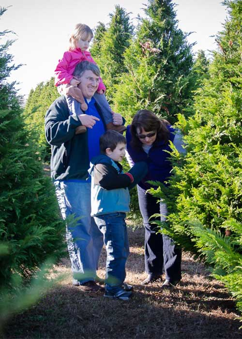 Choose and Cut Live Christmas Trees at Thornhill Christmas Tree ...